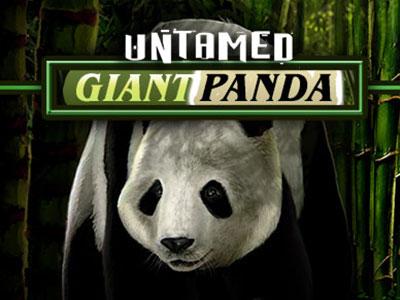 Panda Themed Pokies At Australian Online Casinos